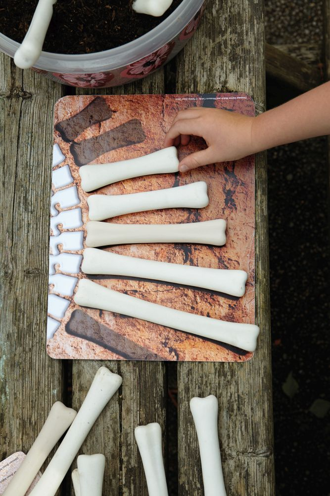 Dinosaur Bones Match and Measure Activity Cards