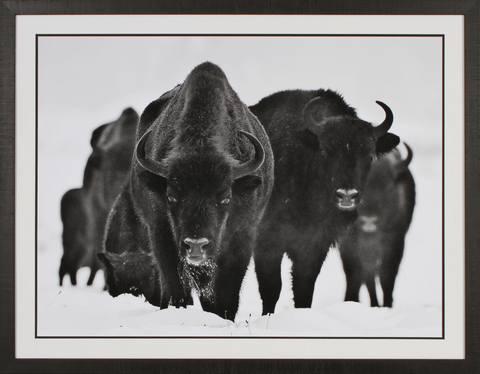 """Winter Bison"" Artwork"