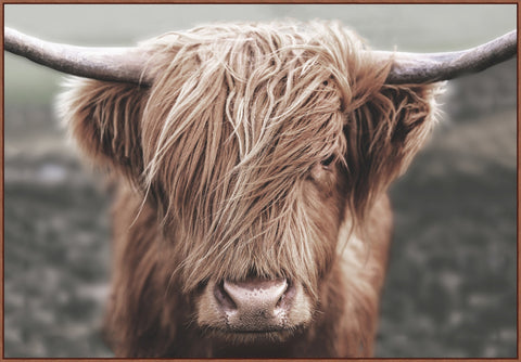 """Highland Cow"" Artwork"