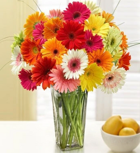 2 Dozen Daisies Delivered To Your Home, Office, Or Promotional Site With Subscribe And Save