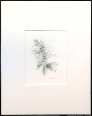 "Green Jasmine 8"" x 10"" Colored pencil on paper by Rick Sargent  16"" x 20"" Frame and matte included"