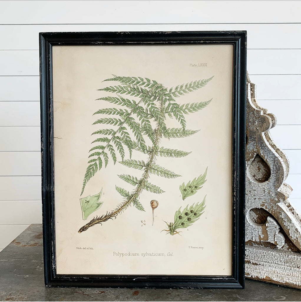 Fern Botanical Collection - 6 to Choose From