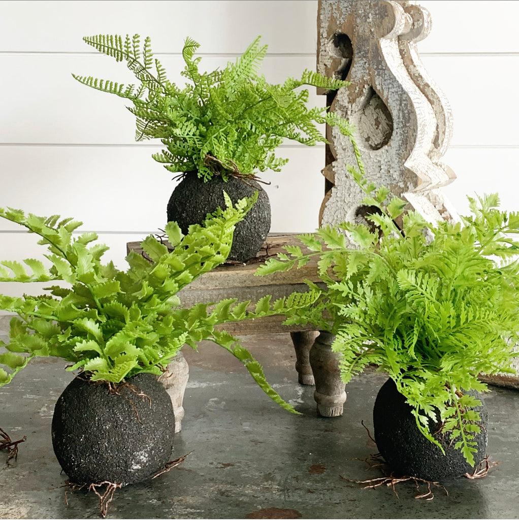 Forest Root Ball Fern LAST CHANCE