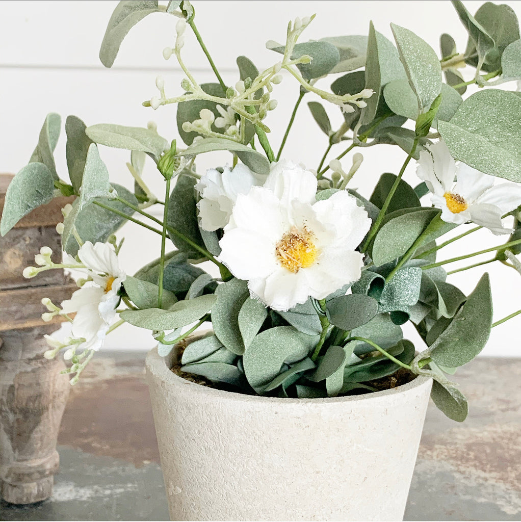 Potted White Daisies