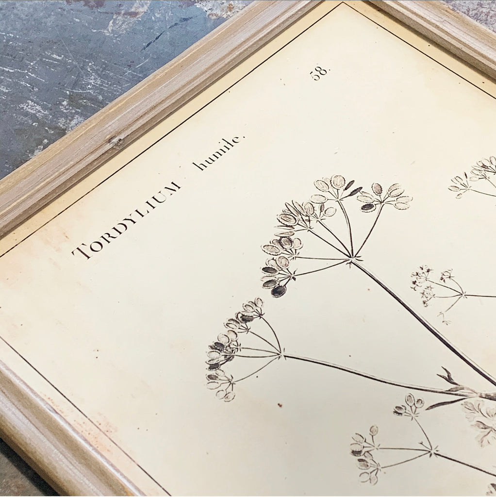 Natural Botanical Print Collection - 4 to Choose From