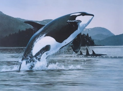 Orca Limited Edition Print