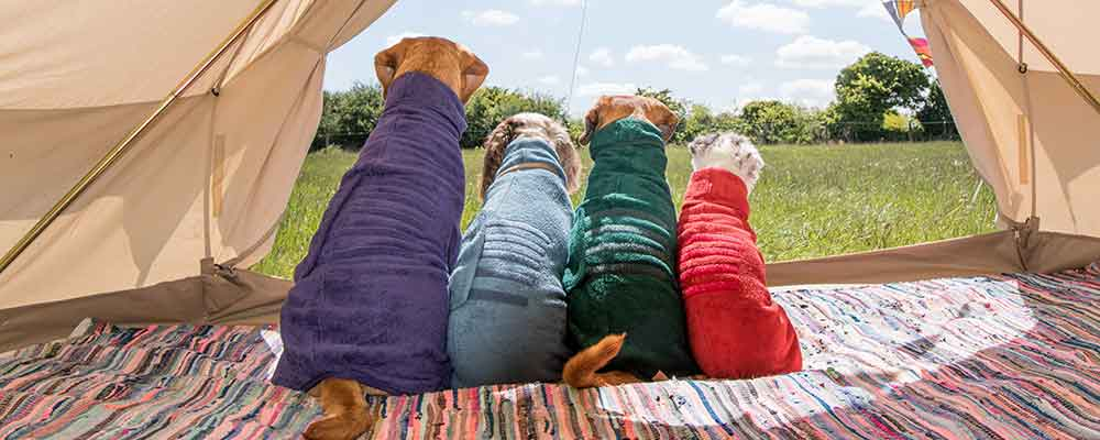 Ruff and Tumble Classic Dog Drying Coat Jacket in Natural Cotton Towelling Showing Red, Green, Blue and Purple Coats Being Worn by Four Dogs in a Teepee Tent