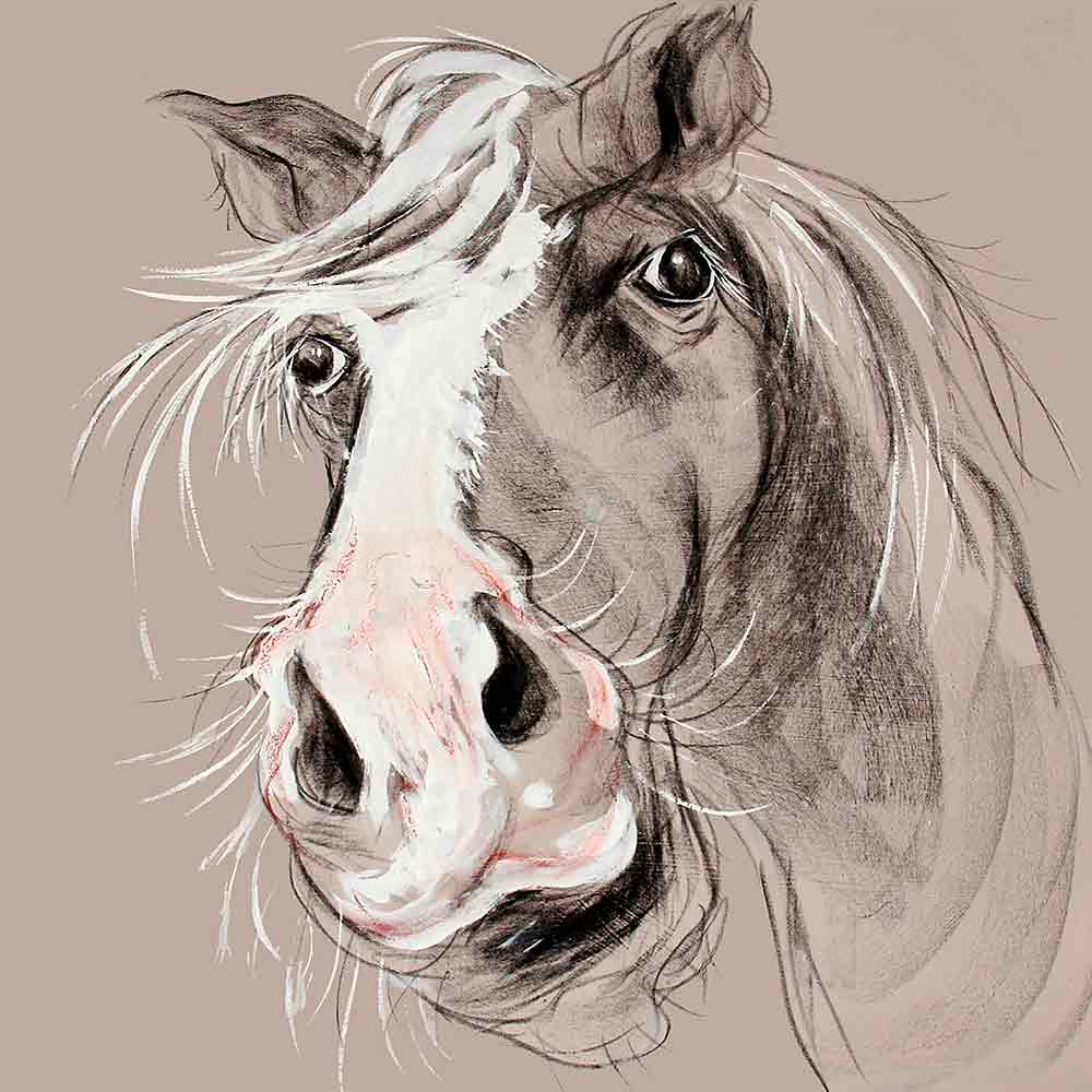 CAROLINE WALKER 'Stephen' The Horse Limited Edition Signed Print | Box Canvas | Black or White Frame