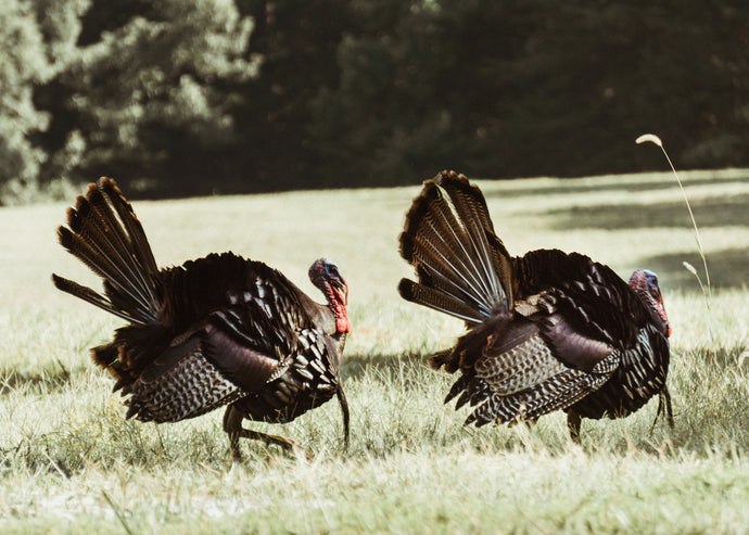 A First Day Turkey Hunt, and A New Call