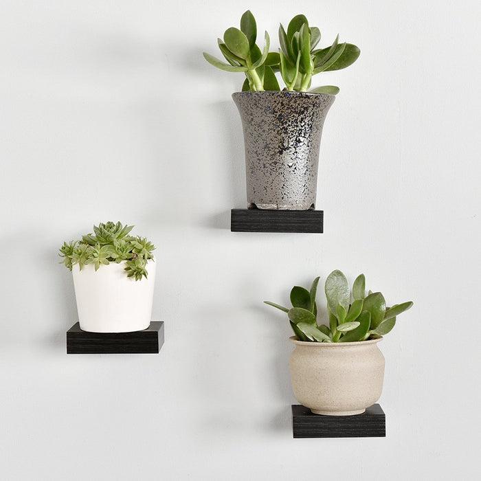 Showcase Display Shelf, Espresso, Set of 3, 4 inch, 3 inch and 2 Inch