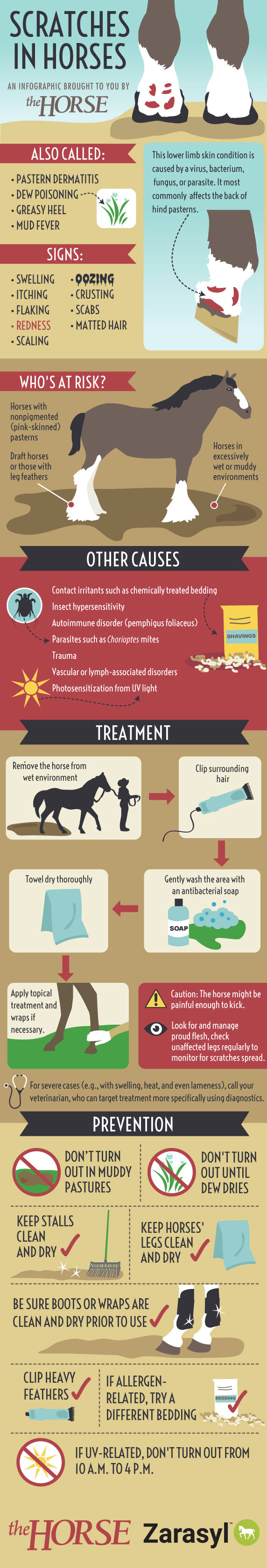 Scratches in horses inforgraphics