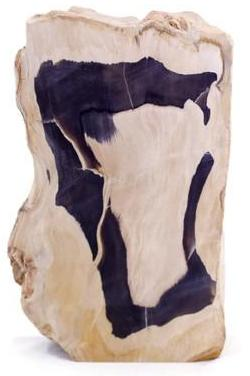 Petrified Palm Wood Slab