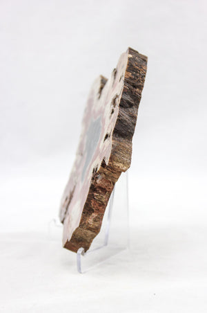 Arizona Petrified Wood