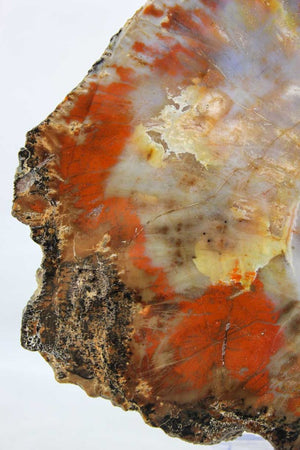 Arizona Petrified Wood Slab