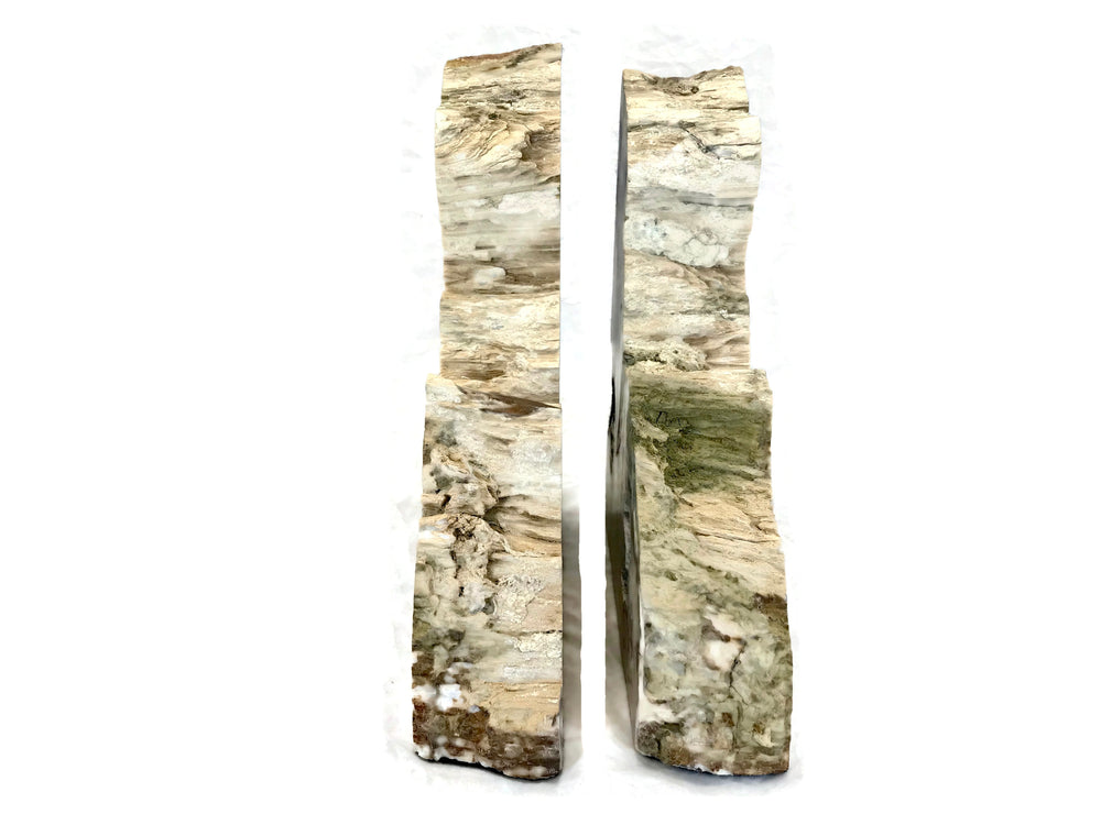 Petrified Cypress Wood Bookends