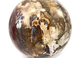 Magnifient Petrified Wood Sphere