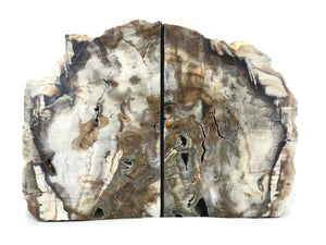 Petrified Maplewood Bookends