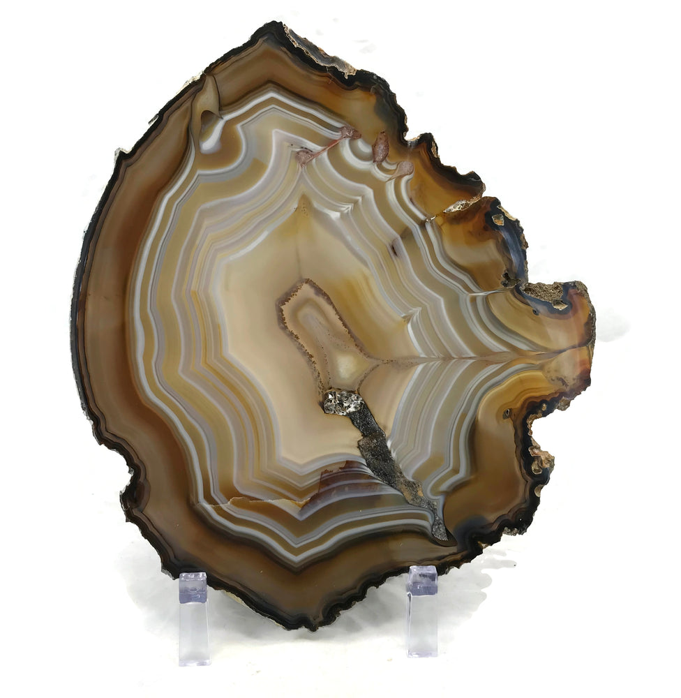 Golden Lined Agate Slice