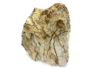 McDermitt Petrified Wood