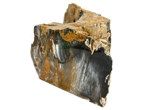 Hubbard Petrified Wood Limb