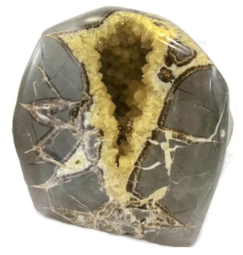 Polished Septarian Nodule