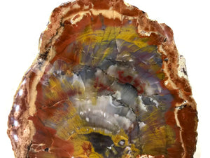 Arizona Rainbow Petrified Wood Slab