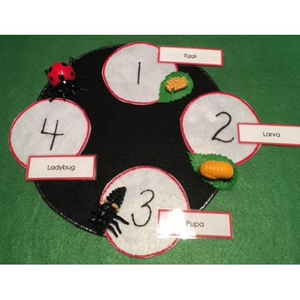 ladybug life cycle kinder books