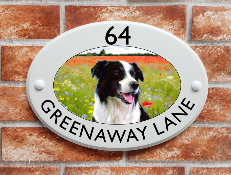 Border Collie dog in a meadow - House Sign Shop