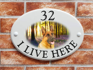 German Shepherd dog in bluebell woods - House Sign Shop