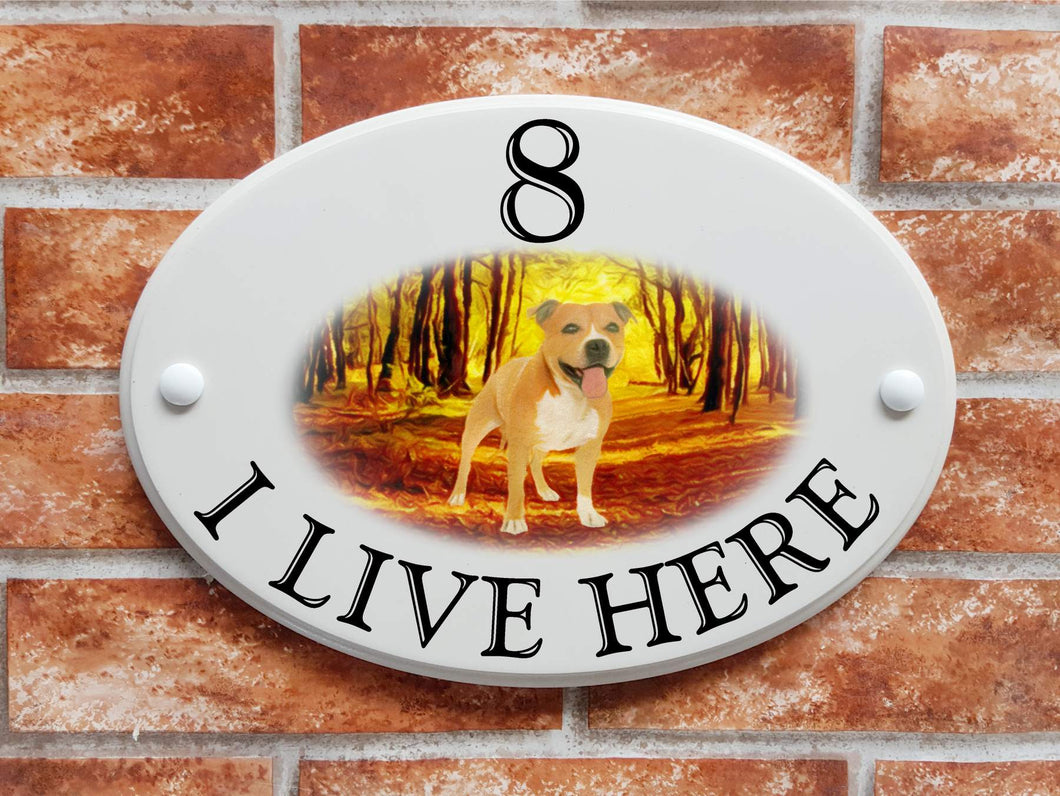 Staffy dog on a woodland walk - House Sign Shop