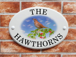 Song Thrush perched on hawthorn branch - House Sign Shop