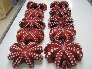 Frozen Whole Octopus cleaned (1kg) - Foodster.vn