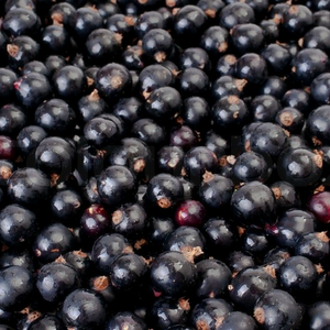 Frozen Blackcurrant (1kg) - Foodster.vn