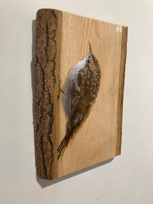 Treecreeper on Ash wood  - Spray painted Art Painting 25 x 32cm - Signed & Limited Edition
