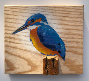 kingfisher bird picture buy