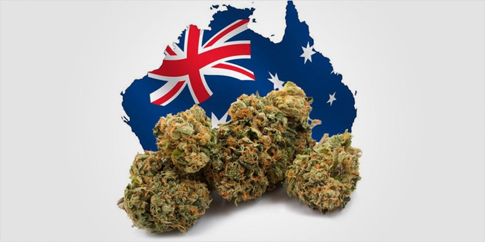 Image result for australian medical cannabis products
