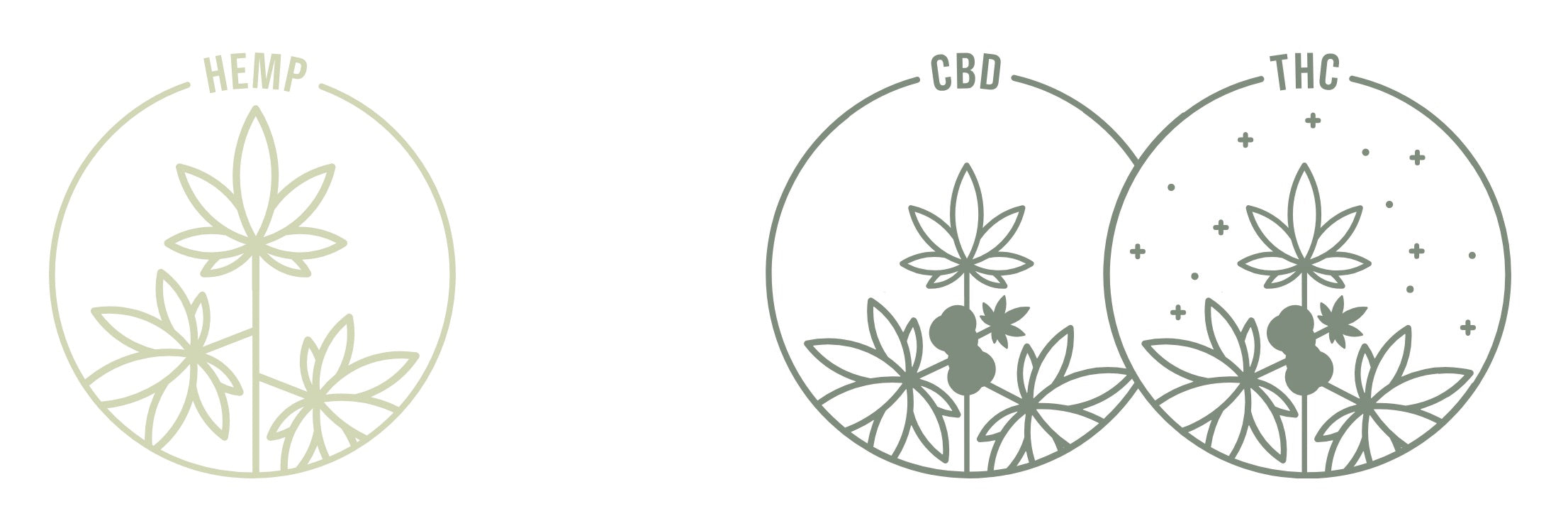 Hemp CBD THC - The Cannabis Company