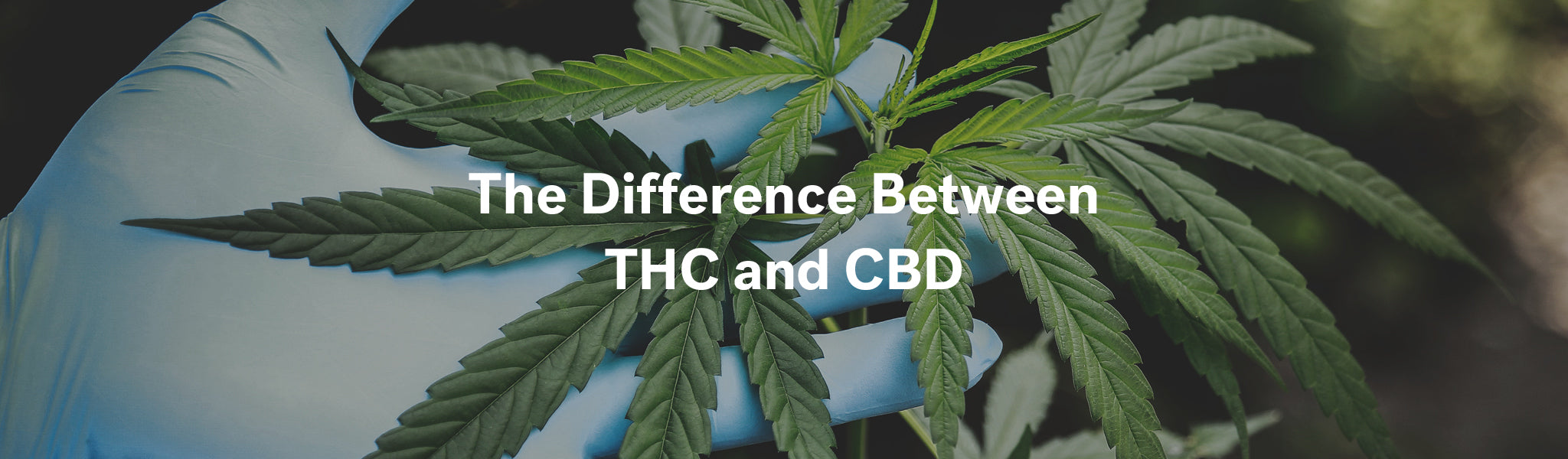 The Difference Between THC and CBD