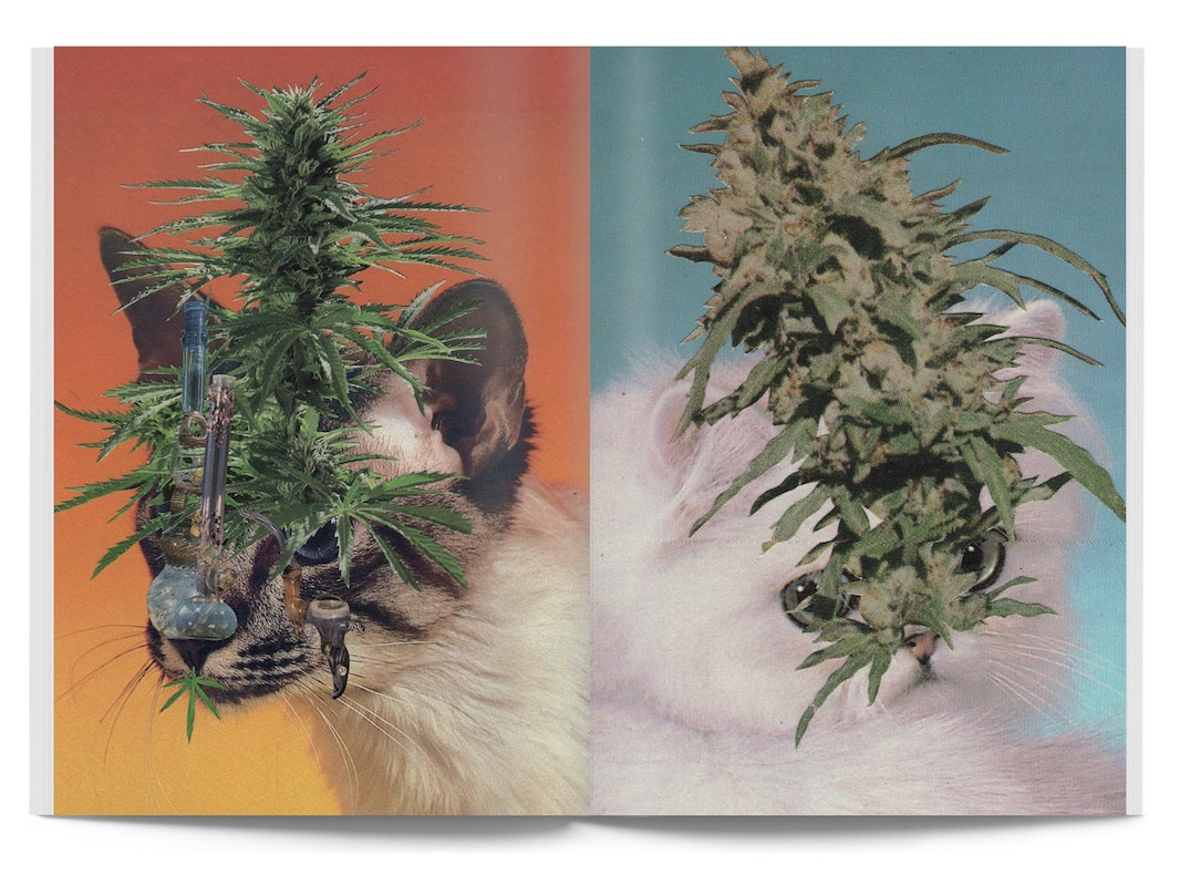 Broccoli Magazine - Cats