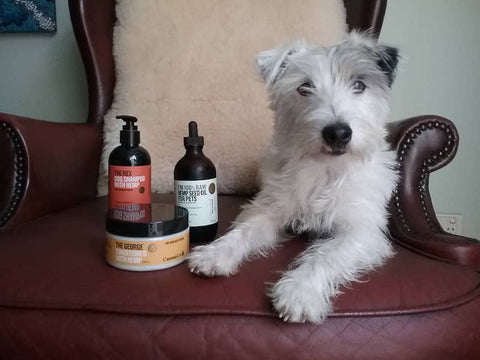 Dog With Healthy Hemp Products