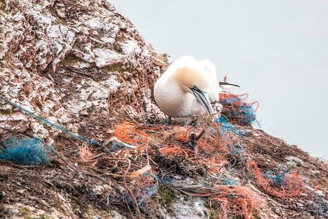 image of a bird sitting on a pile of garbage