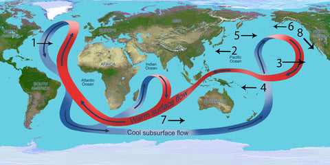 graphic showing the main 9 ocean currents on world's map