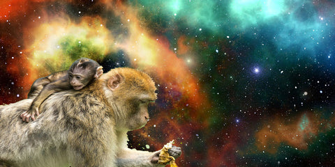 image of two monkeys in space