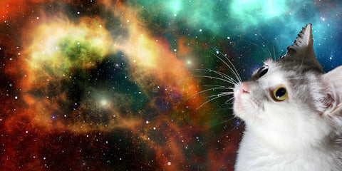 image of a cat in space