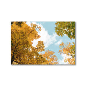Gorgeous fall colours looking straight up through the leaves with a bright blue sky in the background.  Autumn framed art prints 12x18 - ZNA Creative