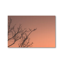 Load image into Gallery viewer, Dark branches cast against a warm February sunset.  Framed paper prints.  Office Art Prints.  ZNA Creative
