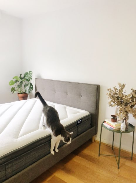 Cat jumping off Eva mattress