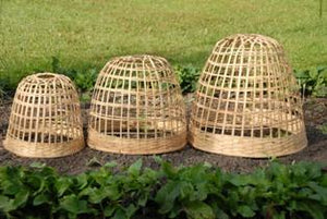 Bamboo Plant Cloche - Heaven in Earth