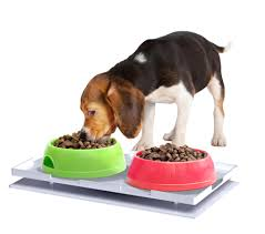 Keeping Ants Out of Your Pet's Food