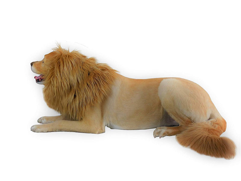 Turn your dog into the Lion King this Halloween
